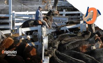 La desregulación macrista que empuja el precio de la carne | Carne