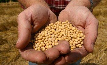Agro: los sojeros se sientan sobre los granos | Banco central