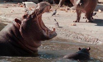 Cierran el zoo porteño: lo convertirán en un Ecoparque | Horacio rodríguez larreta