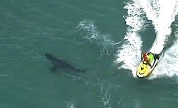 Impactante video: Tiburón de tres metros atacó a surfista | Australia