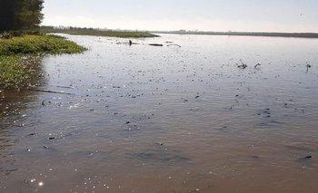 Terrible imagen de un río con cientos de peces muertos | Contaminación