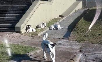 Denuncian que una jauría de perros ataca a investigadores | Alerta
