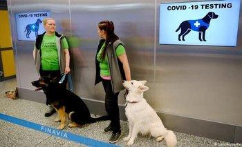 COVID-19: según un estudio, los perros pueden detectar el virus hasta un 94% | Testeos