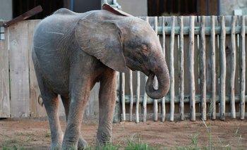 El increíble caso de la elefanta albina de Sudáfrica  | Naturaleza