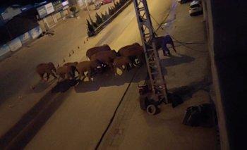 Manada de elefantes salvajes invade una ciudad en China  | Naturaleza