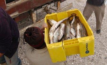 """""""Pescadazo"""" en Congreso: cómo conseguirlo a $100 el kilo   Pescado"""