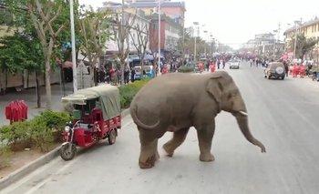 La invasión de elefantes en China empeora y preocupa a los expertos   Animales