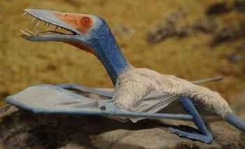 Increíble hallazgo en China: Una nueva especie de dinosaurio volador | Descubrimiento