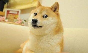 """""""Doge"""": la fortuna que pagaron por el meme más caro de la hisotoria   Memes"""