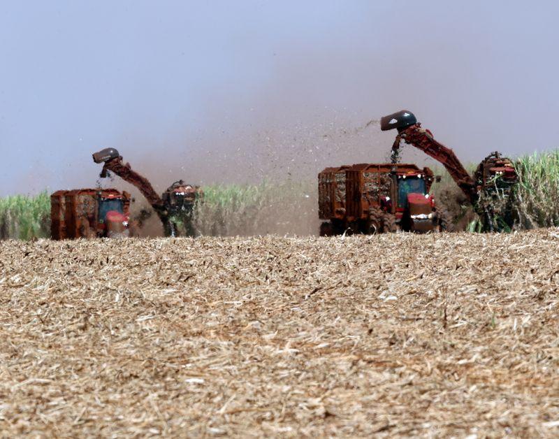 Exportaciones agrícolas son las mejores del siglo    Campo