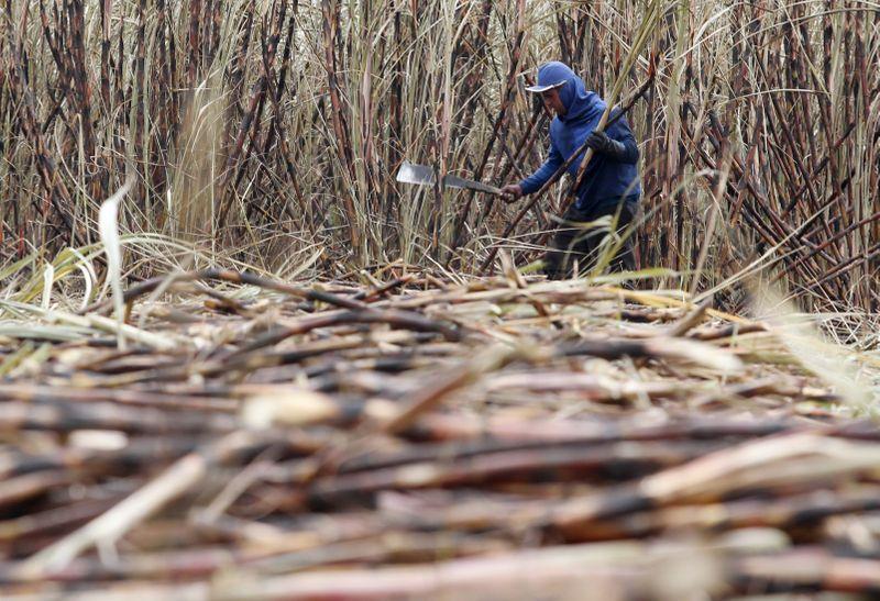 Lanzan progama para contención de hijos de trabajadores rurales   Campo