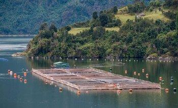 Tierra del Fuego prohibió por ley la cría de salmones en la Provincia | Tierra del fuego