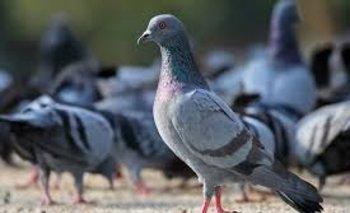 La peor cara de la crisis: Los detuvieron por robar palomas para comer | Crisis