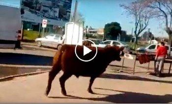 Los Polvorines: un toro se escapó y atacó a una mujer frente a un frigorífico | Video viral