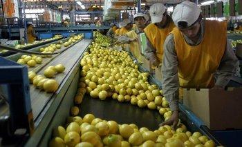 Mancha Negra: la enfermedad que suspendió exportación de limones | Comercio exterior