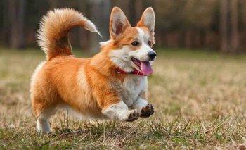 Día Mundial del Perro: ¿Por qué se conmemora hoy? | Efemérides