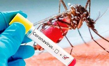 Detectan 13 casos de coronadengue | Salud