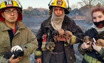 Bomberos rescatan a siete cachorros de un incendio | Rescate