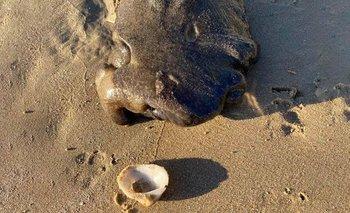 El extraño animal que llamó la atención de todo el mundo | Curiosidades