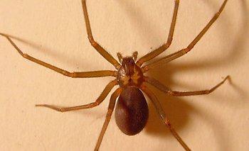 Cuáles son los cinco animales más venenosos en tu casa | Fenómenos naturales
