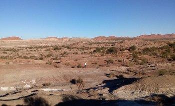 Encontraron en La Rioja una joya de 230 millones de años | La rioja