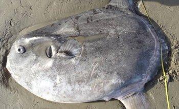 Australia: terror por el insólito hallazgo de un enorme pez | En redes