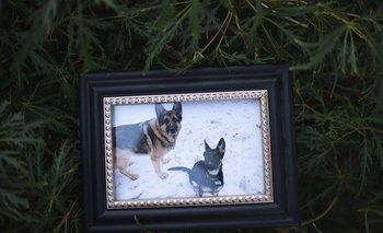 Murió Buddy, el primer perro con coronavirus en EE.UU | Coronavirus