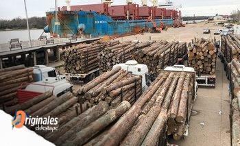La madera duplicó su precio en un año por boom exportador | Insumo clave para construcción