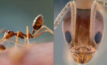 Descubren que la colonia de hormigas más grande está en Argentina   Fenómenos naturales