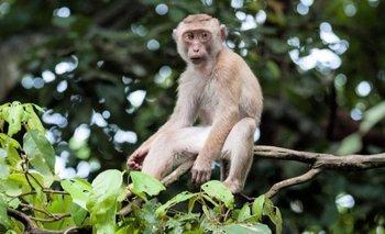 China informó la primera muerte de un humano por un raro virus de los monos | Virus mortal
