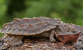 Colombia devolvió a su hábitat más de 1.900 animales rescatados  | Colombia