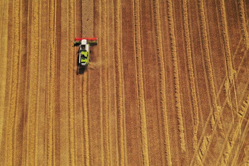 """Argentina apuesta a ser """"líder agrobioindustrial"""" con nueva normativa   Agroindustria"""
