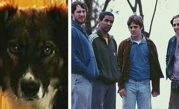 La historia de Stompy, el perro actor que hizo de Severino en Okupas | Series