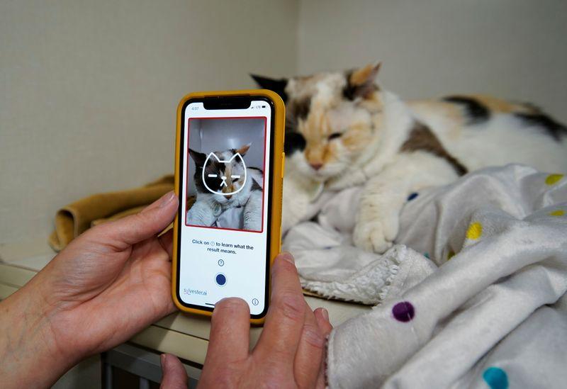 Una nueva app puede decirle a los humanos si su gato es feliz | Tecnología