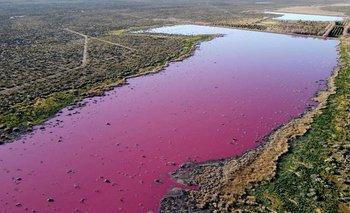 Una laguna se tiñó de rosa en Chubut: la increíble explicación de los expertos   Fenómenos naturales