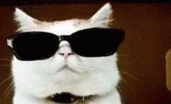 Pensaron que era una fiesta clandestina pero encontraron a un gato DJ | Redes sociales