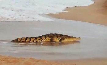 Caminaba por la playa en México y la ataca un cocodrilo | México