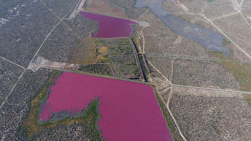 ¿Lagunas rosas?: insólito color de las aguas en Chubut   Medio ambiente