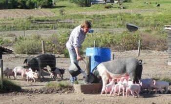 Apareció nueva gripe porcina con potencial de pandemia | Brasil