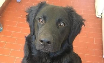 Jimmy, el perro abandonado por su dueño por la crisis | Crisis económica