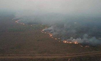 Cuando un árbol tapa el bosque de la Amazonía | Incendio en el amazonas