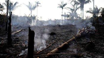 ¿Por qué importó más el incendio en Notre Dame que en el Amazonas? | Incendio en el amazonas