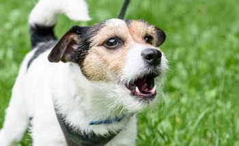 Qué significan los 10 sonidos que más hacen los perros | Curiosidades