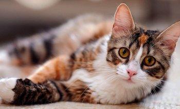 ¿Por qué hoy se celebra el día del gato? | Día internacional del gato