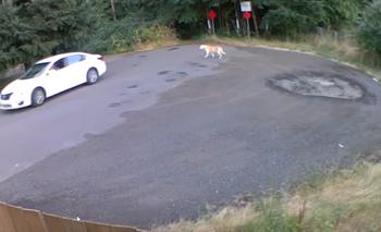 Video: La angustiante reacción de un perro abandonado | Mascotas