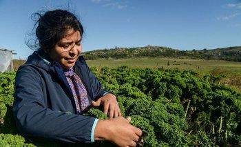 Agricultura destinará $100 millones a la economía popular | Crisis económica