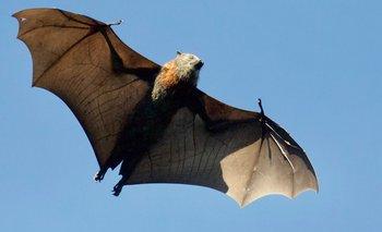 Invasión de murciélagos en Buenos Aires: dónde viven y qué comen | Fenómenos naturales