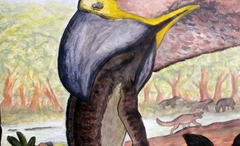 Descubren un desconocido animal de 60 millones de años en Chubut   Fenómenos naturales