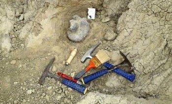 Corrientes: hallaron los restos de un perezoso gigante   Animales