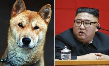 Corea del Norte prohibió tener perros y confiscó las mascotas | Animales